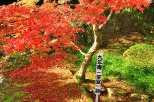 秋の九年庵の写真素材 [FYI02681052]