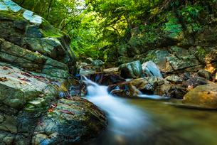 やんばるの渓流の写真素材 [FYI02681075]