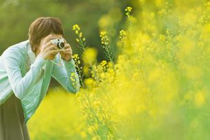 菜の花畑で写真を撮る若い女性の写真素材 [FYI02681080]