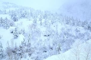 十勝岳温泉から望む樹氷林の写真素材 [FYI02681082]