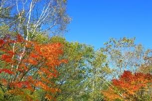 美留和の森と紅葉の写真素材 [FYI02681091]