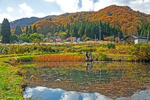 秋景の写真素材 [FYI02681092]