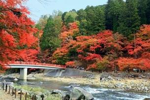 紅葉の香嵐渓の写真素材 [FYI02681109]