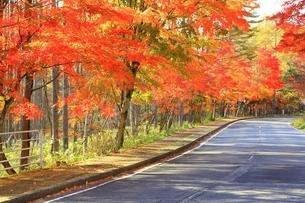 北杜八ケ岳公園道路の紅葉の写真素材 [FYI02681123]