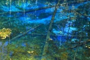 秋の神の子池の写真素材 [FYI02681147]