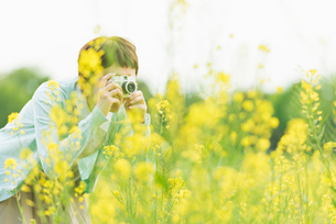 菜の花畑で写真を撮る若い女性の写真素材 [FYI02681167]