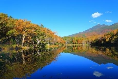 秋の知床五湖 四湖と知床連山の写真素材 [FYI02681182]