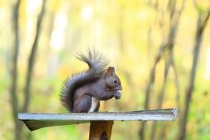美留和の森とエゾリスの写真素材 [FYI02681183]
