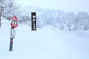 十勝岳温泉から望む樹氷林の写真素材 [FYI02681189]
