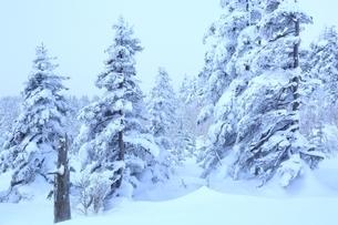 十勝岳温泉から望む樹氷林の写真素材 [FYI02681193]