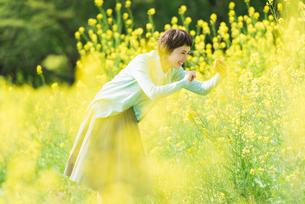 菜の花畑で写真を撮る若い女性の写真素材 [FYI02681223]