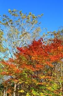 美留和の森と紅葉の写真素材 [FYI02681288]