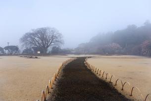 霧の偕楽園の写真素材 [FYI02681408]