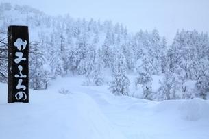 十勝岳温泉から望む樹氷林の写真素材 [FYI02681409]