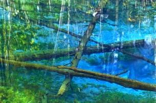 秋の神の子池の写真素材 [FYI02681410]