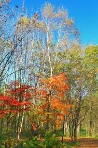 美留和の森と紅葉の写真素材 [FYI02681420]