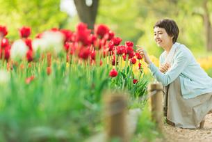 花畑で写真を撮る若い女性の写真素材 [FYI02681430]