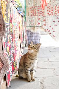 伝統的な刺繍スザニの布を眺めている猫の写真素材 [FYI02681515]