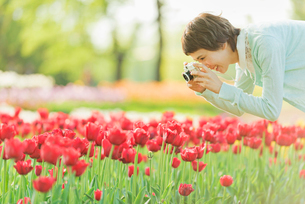 花畑で写真を撮る若い女性の写真素材 [FYI02681517]
