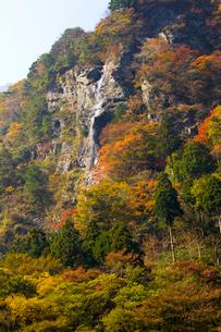 秋の別子ラインの写真素材 [FYI02681590]