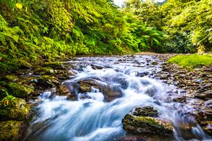 やんばるの川の写真素材 [FYI02681599]