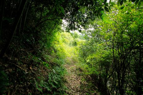 坂本龍馬脱藩の道 白岩の写真素材 [FYI02681633]