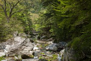 新緑に包まれた渓流の写真素材 [FYI02681804]
