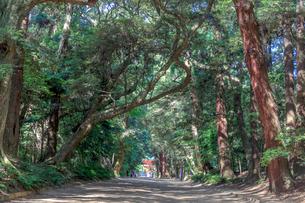 鹿島神宮奥参道の写真素材 [FYI02681811]