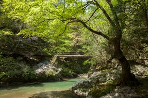 新緑に包まれた渓流の写真素材 [FYI02681816]