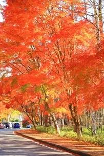 北杜八ケ岳公園道路の紅葉の写真素材 [FYI02681860]
