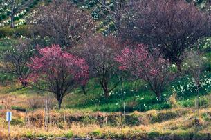 早春の佐久間ダムの写真素材 [FYI02681873]