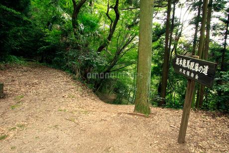 坂本龍馬脱藩の道 泉ヶ峠の写真素材 [FYI02681885]