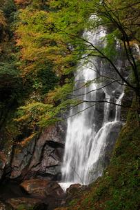 秋の魔戸の滝の写真素材 [FYI02681972]
