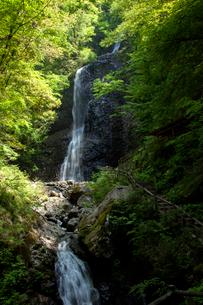 春の白猪の滝の写真素材 [FYI02682017]