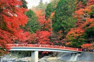 紅葉の香嵐渓の写真素材 [FYI02682057]