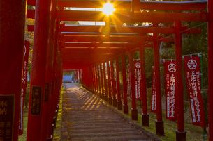 篠山の千本鳥居と言われる王地山稲荷神社の写真素材 [FYI02682082]