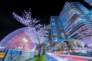 みらい桜回廊の写真素材 [FYI02682104]