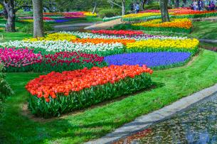 チューリップ咲く昭和記念公園の写真素材 [FYI02682108]