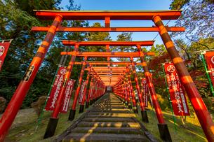 篠山の千本鳥居と言われる王地山稲荷神社の写真素材 [FYI02682133]