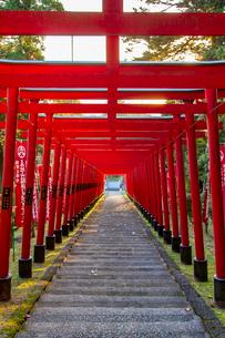 篠山の千本鳥居と言われる王地山稲荷神社の写真素材 [FYI02682151]