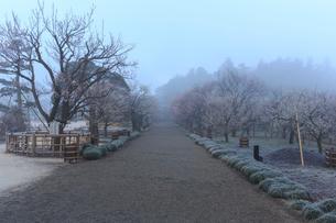 霧の偕楽園の写真素材 [FYI02682214]