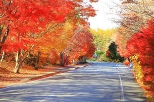北杜八ケ岳公園道路の紅葉の写真素材 [FYI02682314]