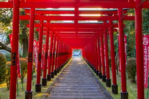 篠山の千本鳥居と言われる王地山稲荷神社の写真素材 [FYI02682375]
