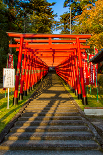 篠山の千本鳥居と言われる王地山稲荷神社の写真素材 [FYI02682412]