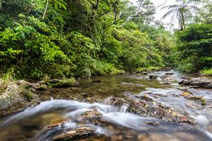 やんばるの川の写真素材 [FYI02682435]