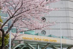 サクラとロイヤルパークホテルの写真素材 [FYI02682446]
