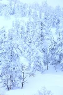 十勝岳温泉から望む樹氷林の写真素材 [FYI02682464]