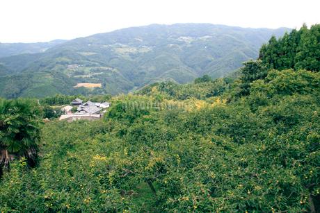 坂本龍馬脱藩の道 石上峠の写真素材 [FYI02682482]