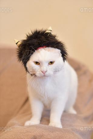 雷様になった猫の写真素材 [FYI02682711]