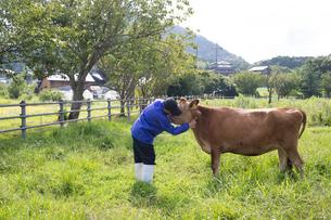 乳牛を手入れする30代男性の写真素材 [FYI02684287]
